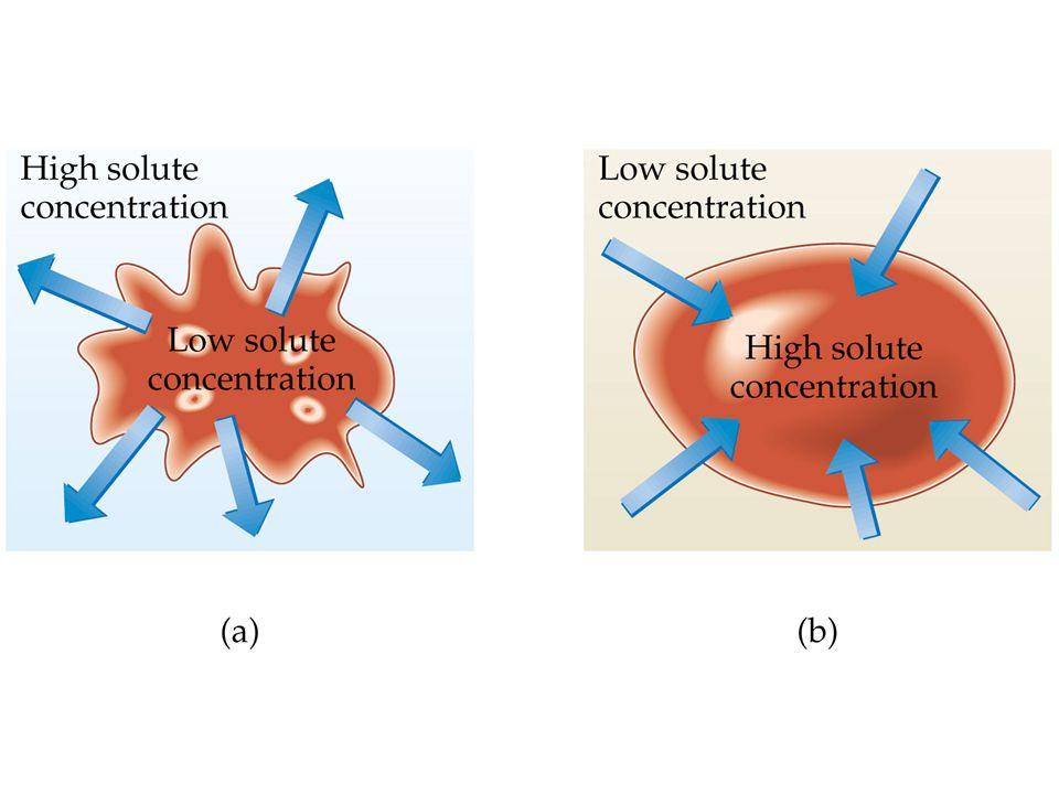 isotonic = isosmotic: same osmotic pressure