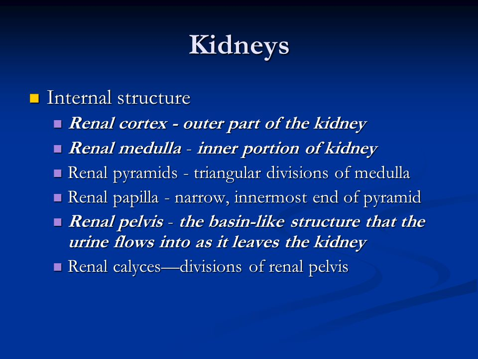 Kidneys Internal structure Internal structure Renal cortex - outer part of the kidney Renal cortex - outer part of the kidney Renal medulla - inner po