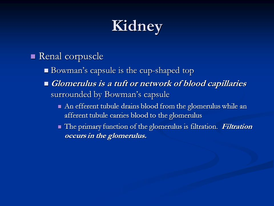 Kidney Renal corpuscle Renal corpuscle Bowman's capsule is the cup-shaped top Bowman's capsule is the cup-shaped top Glomerulus is a tuft or network o