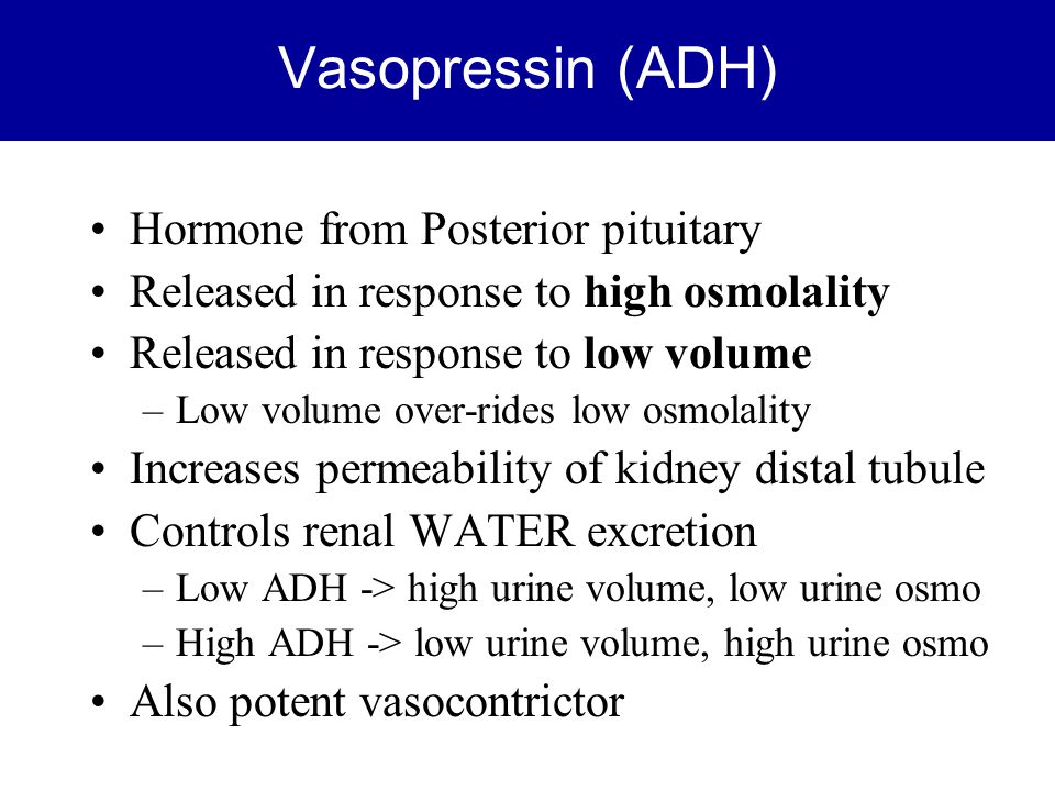 Vasopressin (ADH) Hormone from Posterior pituitary Released in response to high osmolality Released in response to low volume –Low volume over-rides l