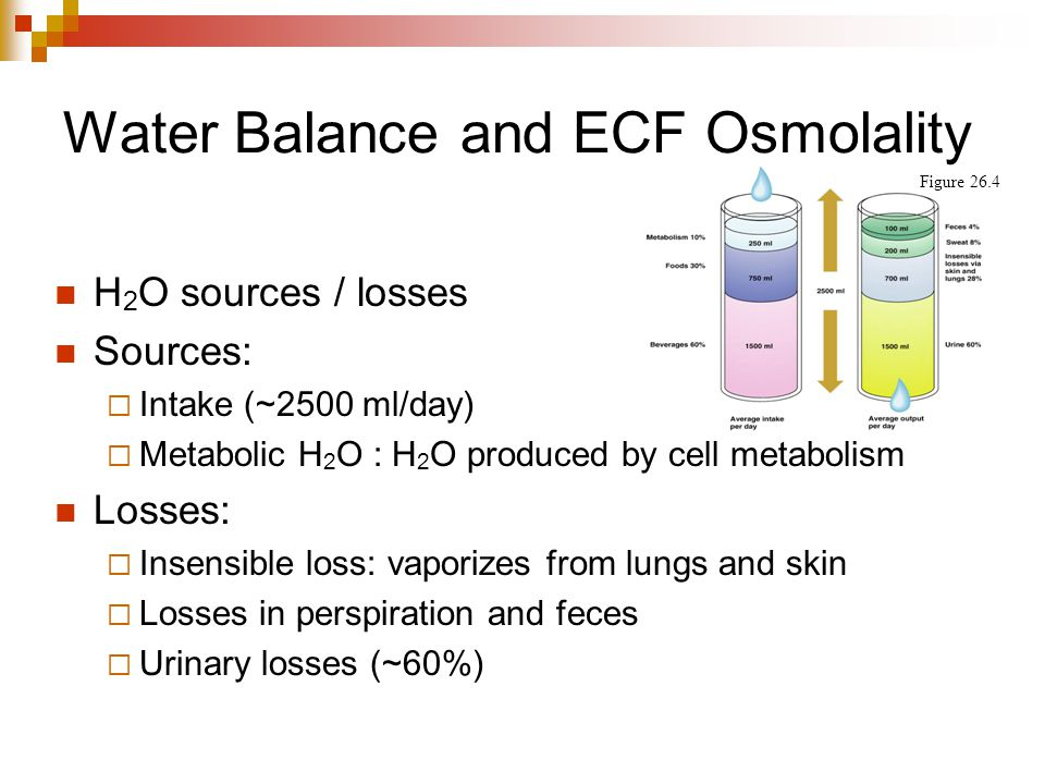 Water Balance and ECF Osmolality H 2 O sources / losses Sources:  Intake (~2500 ml/day)  Metabolic H 2 O : H 2 O produced by cell metabolism Losses: