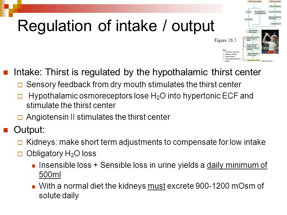 Regulation of intake / output Intake: Thirst is regulated by the hypothalamic thirst center  Sensory feedback from dry mouth stimulates the thirst ce
