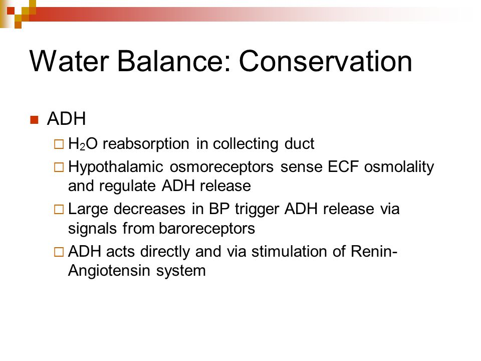 Water Balance: Conservation ADH  H 2 O reabsorption in collecting duct  Hypothalamic osmoreceptors sense ECF osmolality and regulate ADH release  L