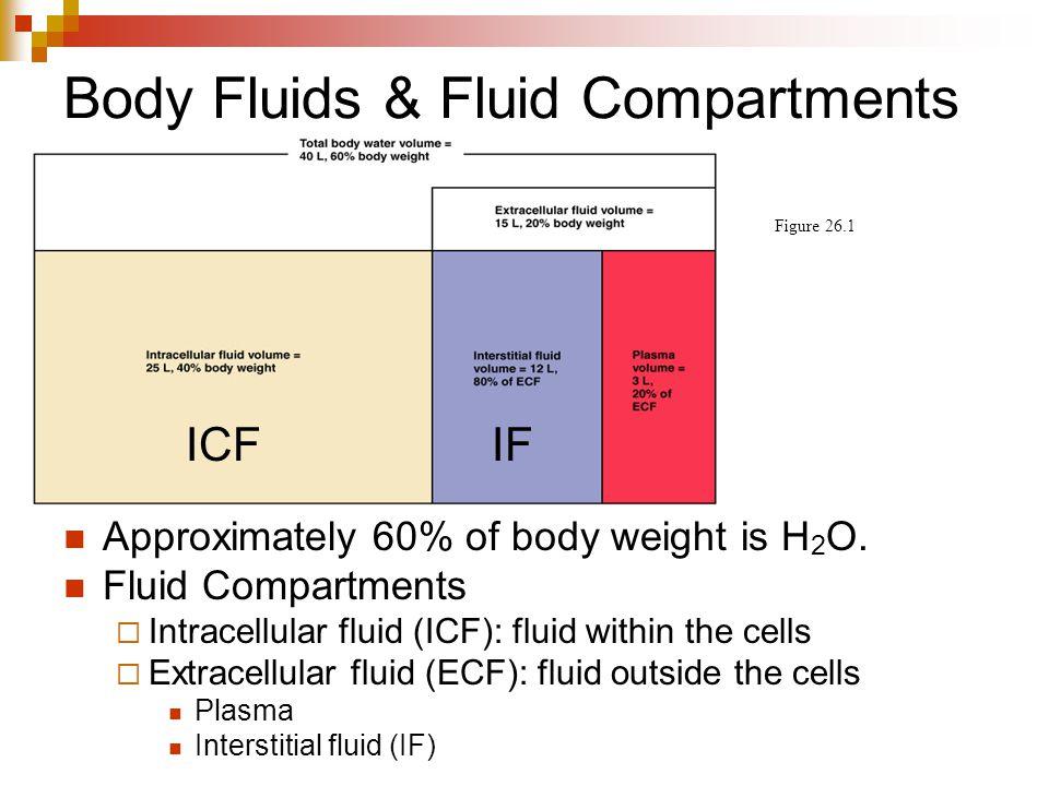 Body Fluids & Fluid Compartments Figure 26.1 Approximately 60% of body weight is H 2 O. Fluid Compartments  Intracellular fluid (ICF): fluid within t
