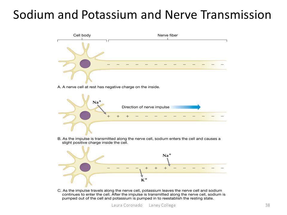 Sodium and Potassium and Nerve Transmission Laura Coronado Laney College38