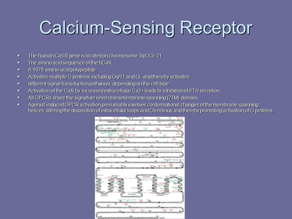 Calcium-Sensing Receptor  The human CaSR gene is located on chromosome 3q13.3–21  The amino acid sequence of the hCaR  A 1078 amino-acid polypeptid