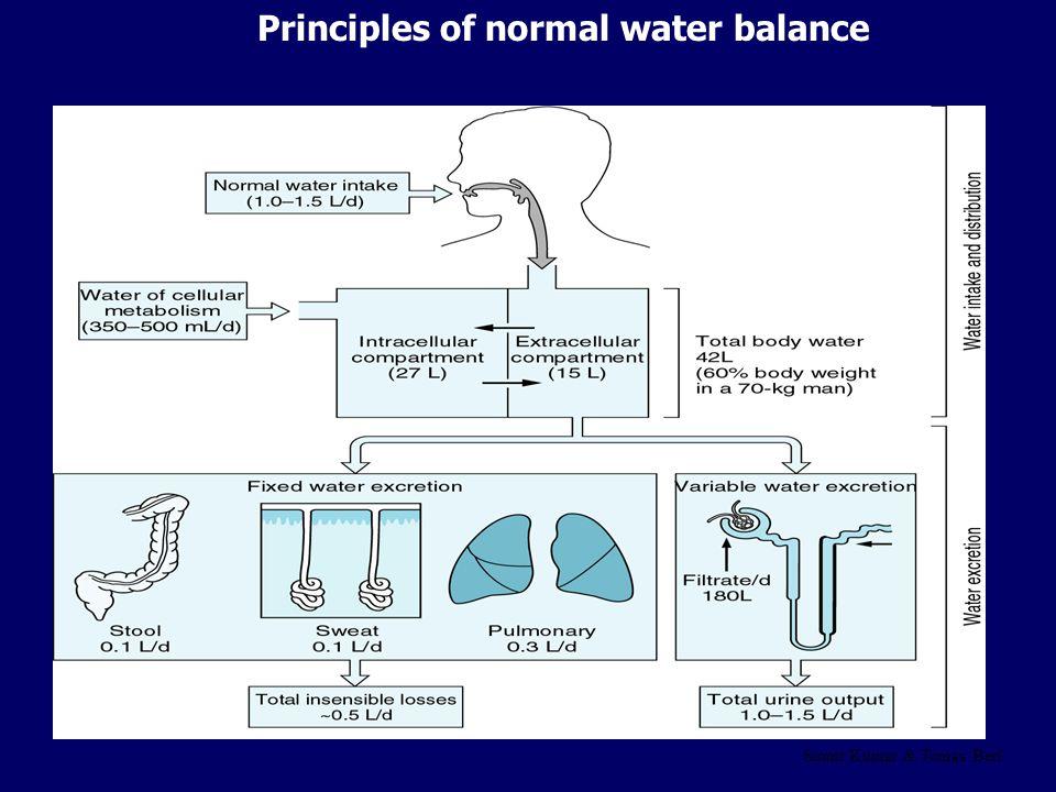 Normal water balance (24 h) IntakeLoss Cellular metabolism0,5 lUrine1-2 l Normal water intake1 lStool0,1 l 1 lSweat0,6-0,8 l Pulmonary0,5 l TOTAL2,5 l