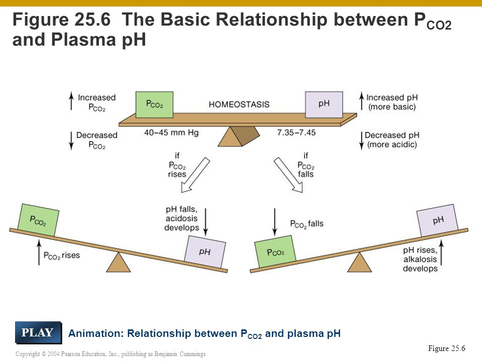 Copyright © 2004 Pearson Education, Inc., publishing as Benjamin Cummings Figure 25.6 Figure 25.6 The Basic Relationship between P CO2 and Plasma pH Animation: Relationship between P CO2 and plasma pH PLAY