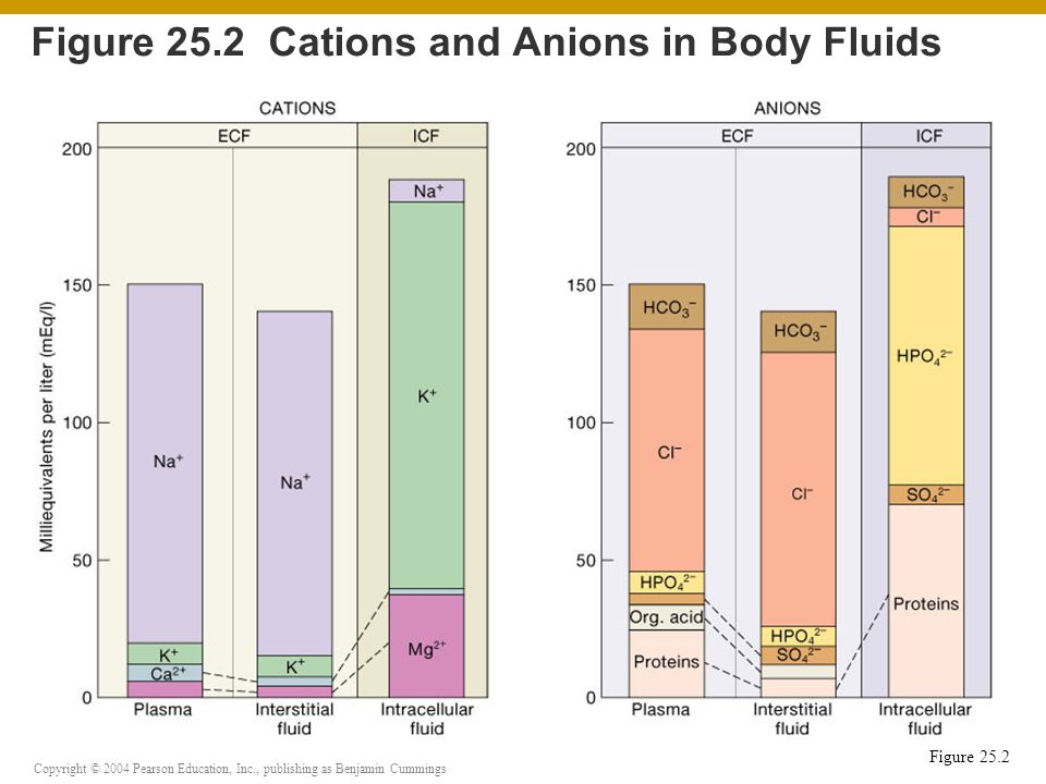 Copyright © 2004 Pearson Education, Inc., publishing as Benjamin Cummings Figure 25.7 Buffer Systems in Body Fluids Figure 25.7