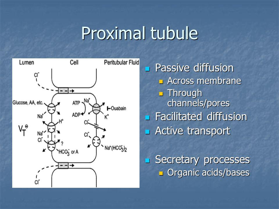 Proximal tubule Passive diffusion Passive diffusion Across membrane Through channels/pores Facilitated diffusion Facilitated diffusion Active transpor