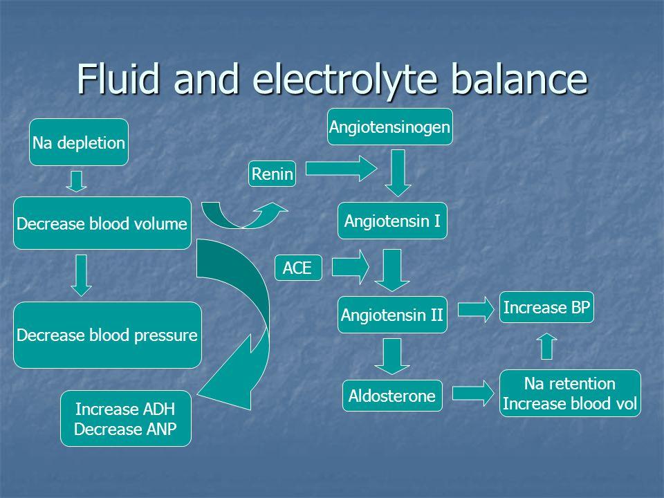 Fluid and electrolyte balance Na depletion Decrease blood volume Decrease blood pressure Angiotensinogen Angiotensin I Renin Angiotensin II ACE Aldost