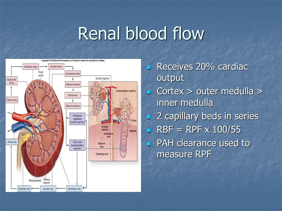 Renal blood flow Receives 20% cardiac output Receives 20% cardiac output Cortex > outer medulla > inner medulla Cortex > outer medulla > inner medulla
