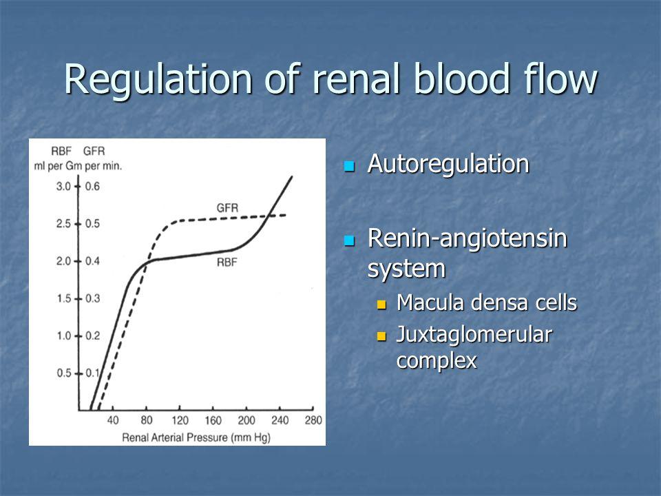 Regulation of renal blood flow Autoregulation Autoregulation Renin-angiotensin system Renin-angiotensin system Macula densa cells Juxtaglomerular comp
