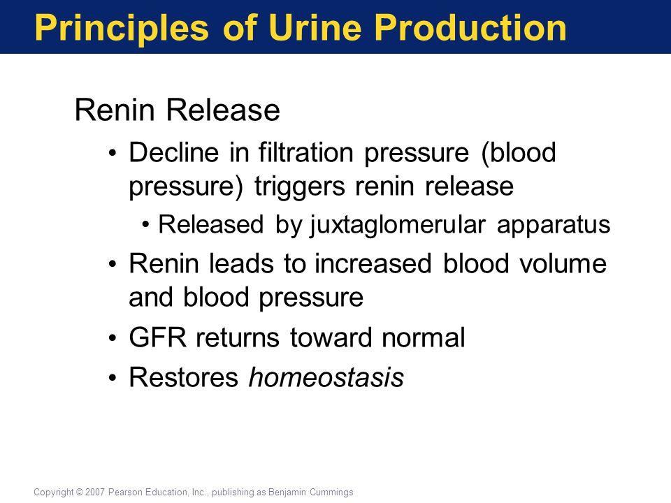 Principles of Urine Production Renin Release Decline in filtration pressure (blood pressure) triggers renin release Released by juxtaglomerular appara