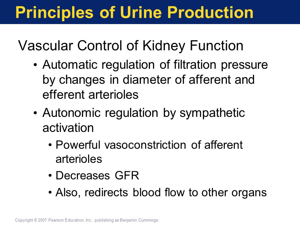 Principles of Urine Production Vascular Control of Kidney Function Automatic regulation of filtration pressure by changes in diameter of afferent and