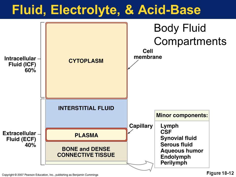 Fluid, Electrolyte, & Acid-Base Body Fluid Compartments Figure 18-12