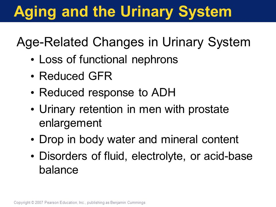 Aging and the Urinary System Age-Related Changes in Urinary System Loss of functional nephrons Reduced GFR Reduced response to ADH Urinary retention i