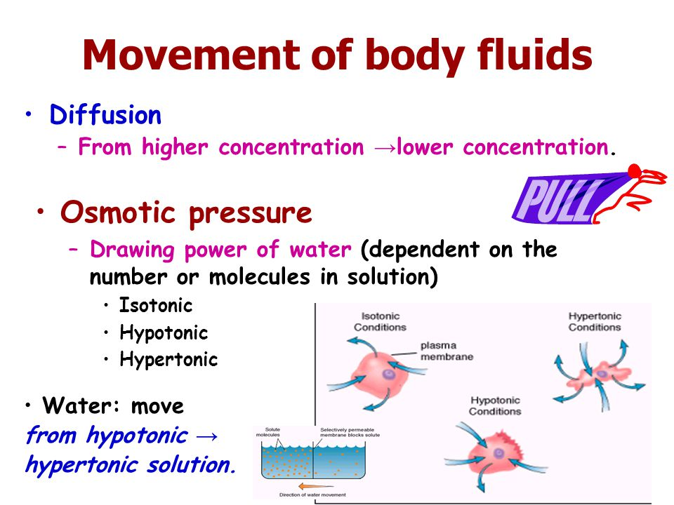 Movement of body fluids Diffusion –From higher concentration → lower concentration. Osmotic pressure –Drawing power of water (dependent on the number