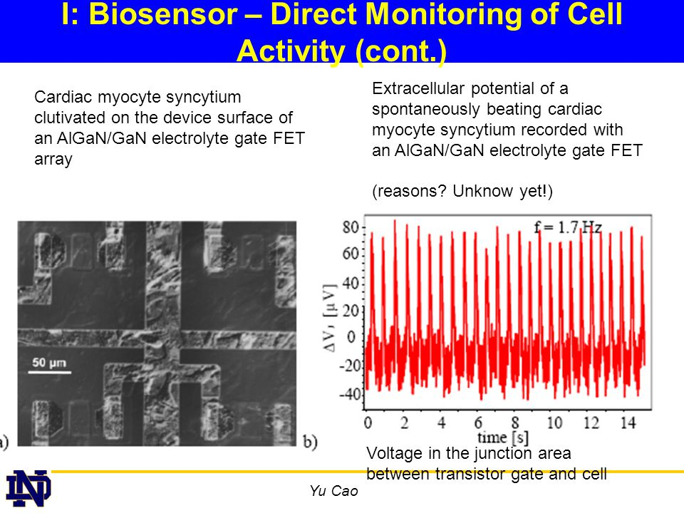 Yu Cao I: Biosensor – Direct Monitoring of Cell Activity (cont.) Cardiac myocyte syncytium clutivated on the device surface of an AlGaN/GaN electrolyte gate FET array Extracellular potential of a spontaneously beating cardiac myocyte syncytium recorded with an AlGaN/GaN electrolyte gate FET (reasons.