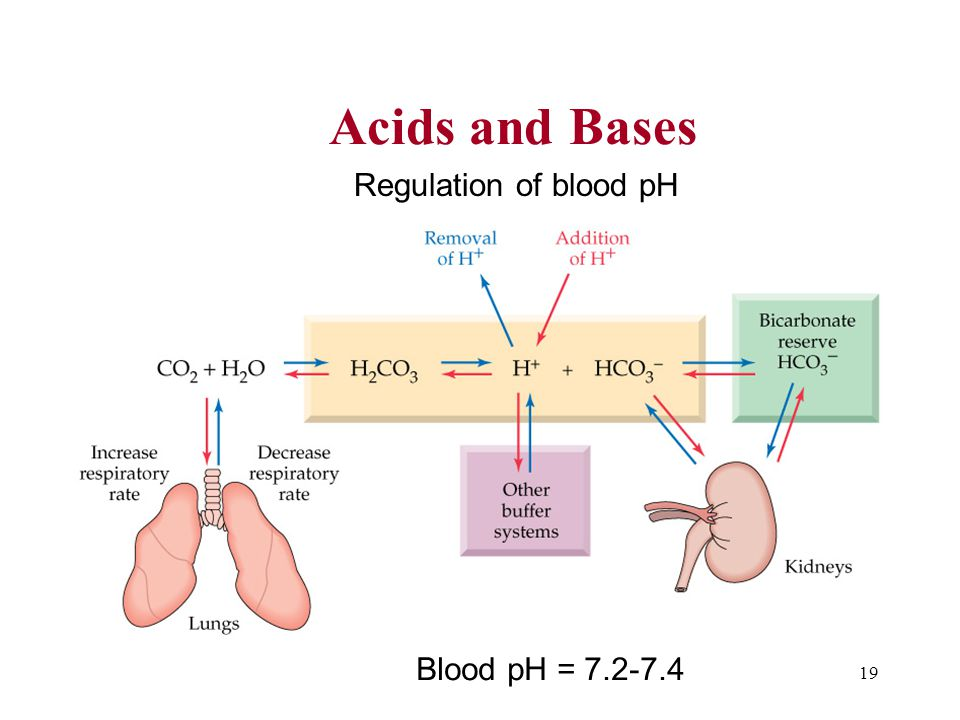 19 Acids and Bases Blood pH = 7.2-7.4 Regulation of blood pH