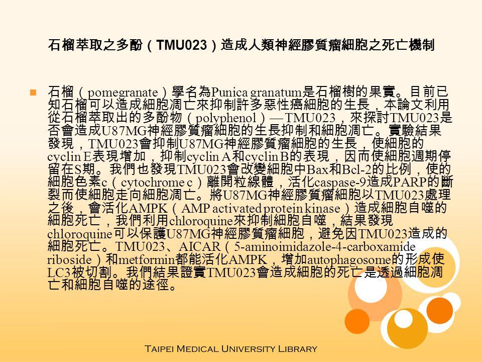石榴萃取之多酚( TMU023 )造成人類神經膠質瘤細胞之死亡機制 石榴( pomegranate )學名為 Punica granatum 是石榴樹的果實。目前已 知石榴可以造成細胞凋亡來抑制許多惡性癌細胞的生長,本論文利用 從石榴萃取出的多酚物( polyphenol ) — TMU023 ,來探討 TMU023 是 否會造成 U87MG 神經膠質瘤細胞的生長抑制和細胞凋亡。實驗結果 發現, TMU023 會抑制 U87MG 神經膠質瘤細胞的生長,使細胞的 cyclin E 表現增加,抑制 cyclin A 和 cyclin B 的表現,因而使細胞週期停 留在 S 期。我們也發現 TMU023 會改變細胞中 Bax 和 Bcl-2 的比例,使的 細胞色素 c ( cytochrome c )離開粒線體,活化 caspase-9 造成 PARP 的斷 裂而使細胞走向細胞凋亡。將 U87MG 神經膠質瘤細胞以 TMU023 處理 之後,會活化 AMPK ( AMP activated protein kinase )造成細胞自噬的 細胞死亡,我們利用 chloroquine 來抑制細胞自噬,結果發現 chloroquine 可以保護 U87MG 神經膠質瘤細胞,避免因 TMU023 造成的 細胞死亡。 TMU023 、 AICAR ( 5-aminoimidazole-4-carboxamide riboside )和 metformin 都能活化 AMPK ,增加 autophagosome 的形成使 LC3 被切割。我們結果證實 TMU023 會造成細胞的死亡是透過細胞凋 亡和細胞自噬的途徑。