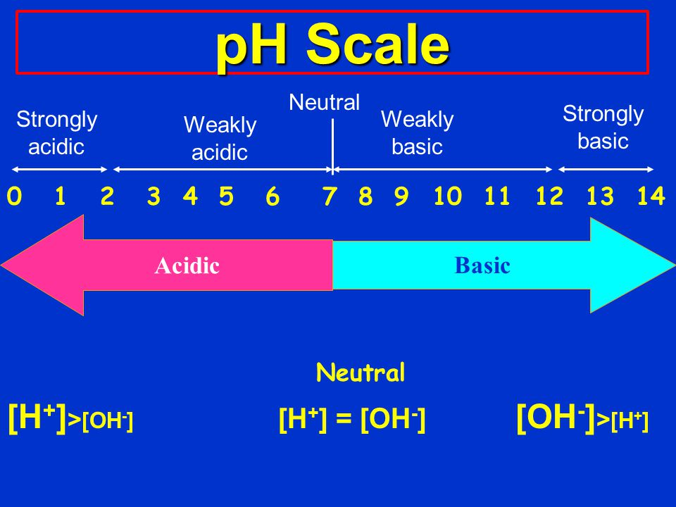 pH Scale 0 1 2 3 4 5 6 7 8 9 10 11 12 13 14 Neutral [H + ] > [OH - ] [H + ] = [OH - ] [OH - ] > [H + ] Acidic Basic Strongly acidic Weakly acidic Neutral Weakly basic Strongly basic