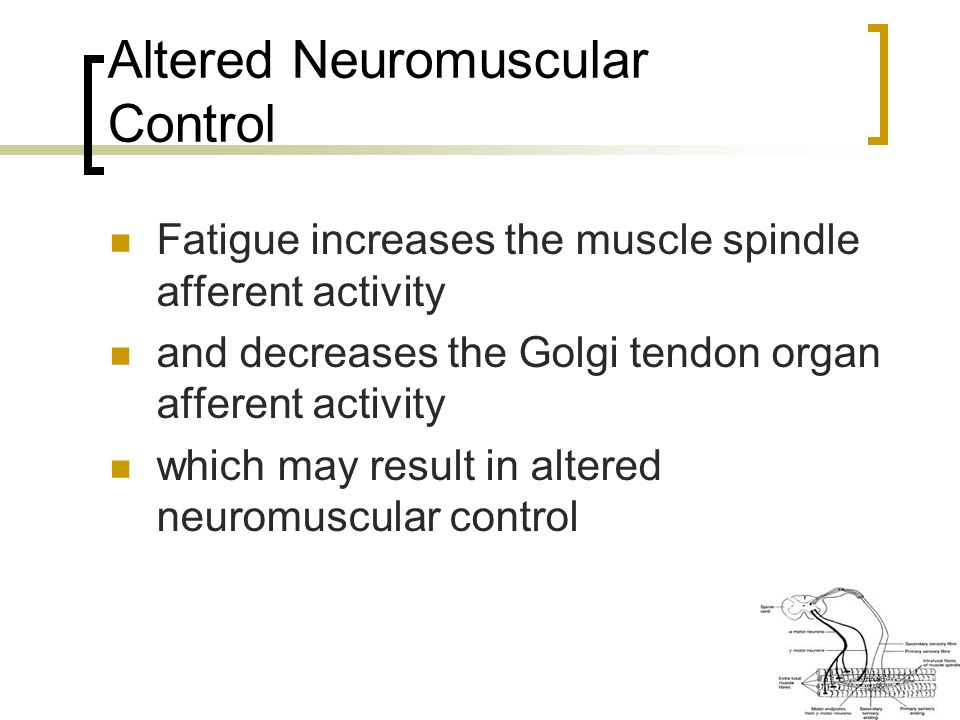Altered Neuromuscular Control Fatigue increases the muscle spindle afferent activity and decreases the Golgi tendon organ afferent activity which may result in altered neuromuscular control