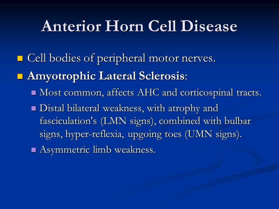 Anterior Horn Cell Disease Cell bodies of peripheral motor nerves.