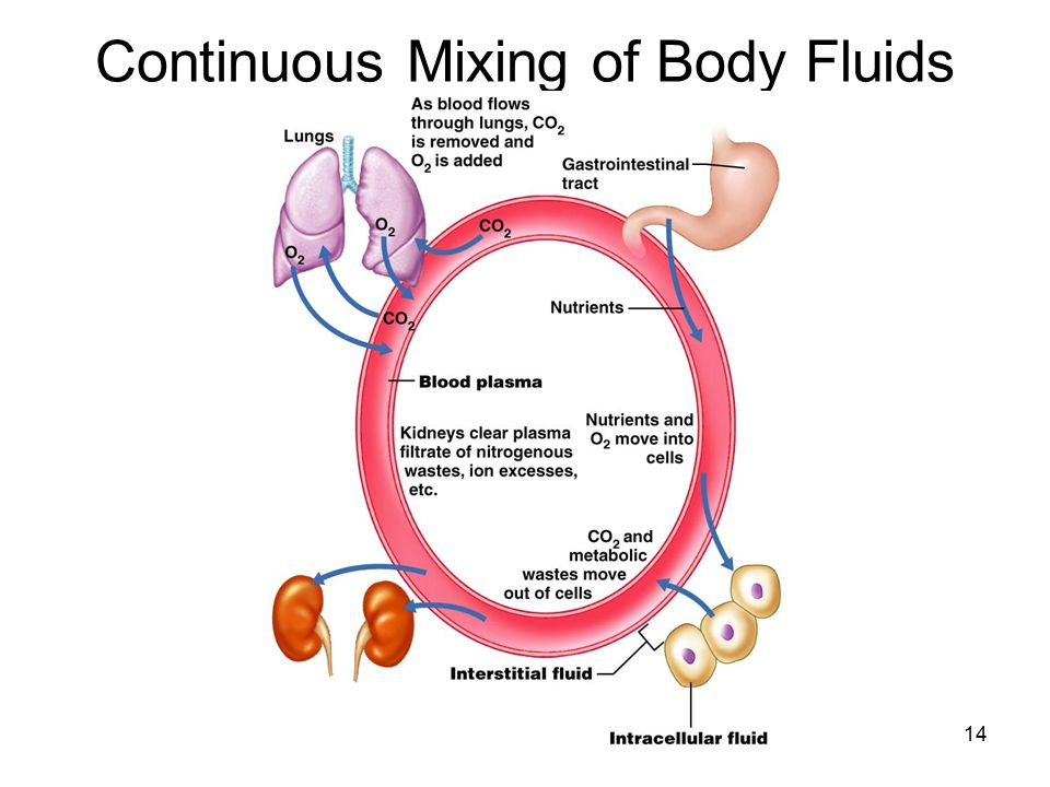 Continuous Mixing of Body Fluids 14