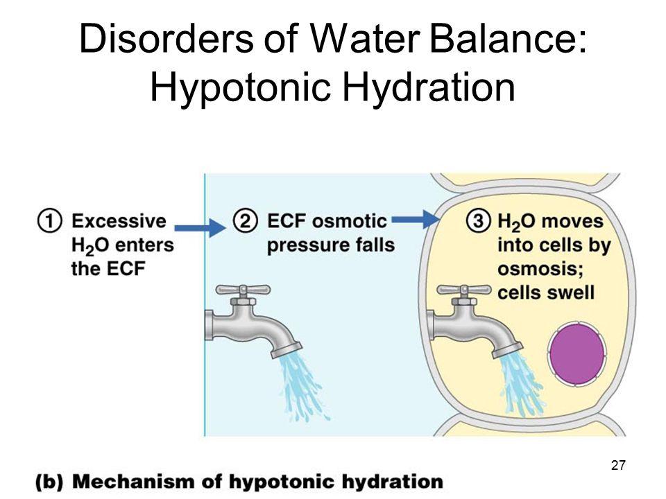 Disorders of Water Balance: Hypotonic Hydration Figure 26.7b 27