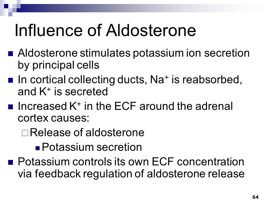 Influence of Aldosterone Aldosterone stimulates potassium ion secretion by principal cells In cortical collecting ducts, Na + is reabsorbed, and K + i