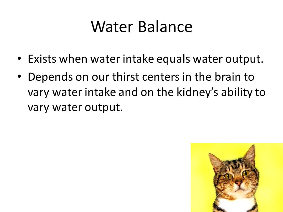 Water Balance Exists when water intake equals water output.