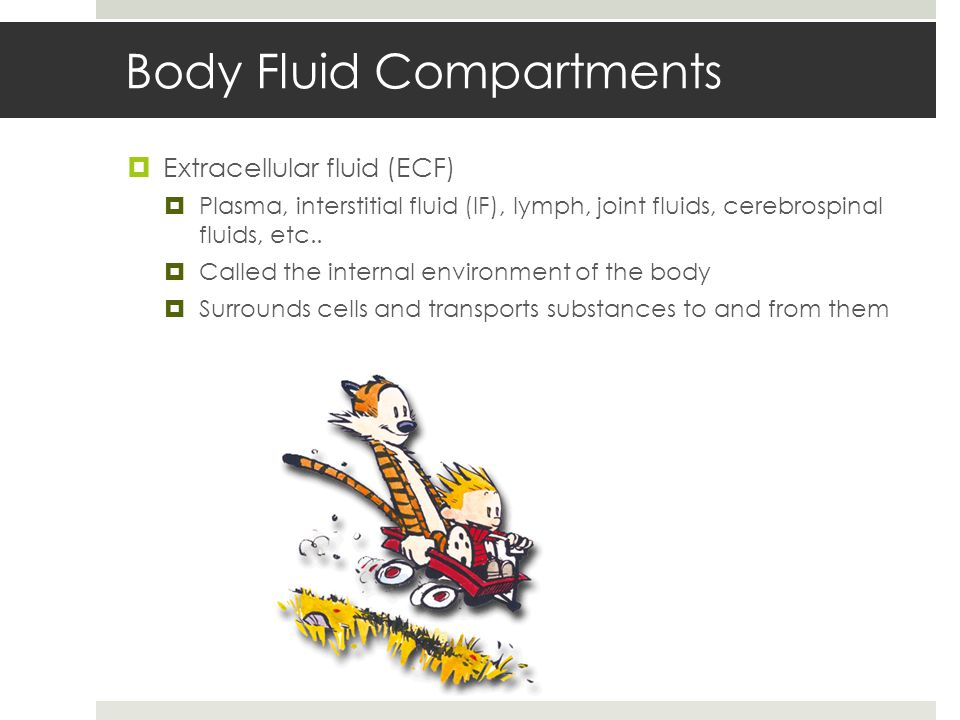 Body Fluid Compartments  Extracellular fluid (ECF)  Plasma, interstitial fluid (IF), lymph, joint fluids, cerebrospinal fluids, etc..