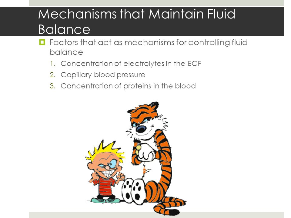 Mechanisms that Maintain Fluid Balance  Factors that act as mechanisms for controlling fluid balance 1.Concentration of electrolytes in the ECF 2.Capillary blood pressure 3.Concentration of proteins in the blood