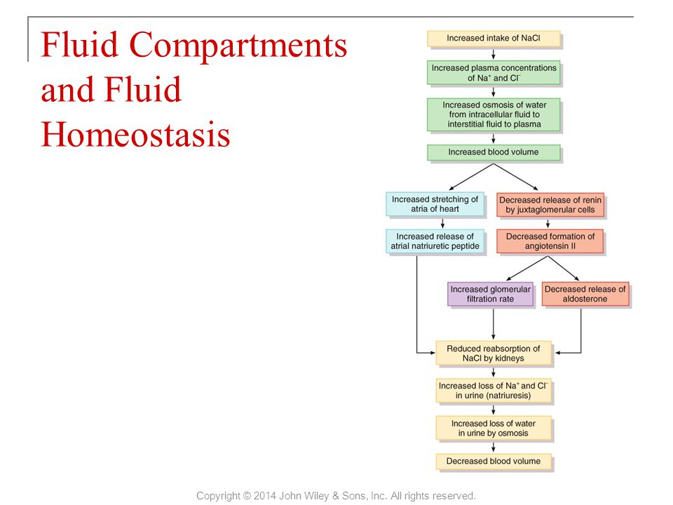 Fluid Compartments and Fluid Homeostasis Copyright © 2014 John Wiley & Sons, Inc. All rights reserved.