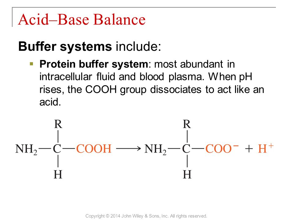 Buffer systems include:  Protein buffer system: most abundant in intracellular fluid and blood plasma. When pH rises, the COOH group dissociates to a