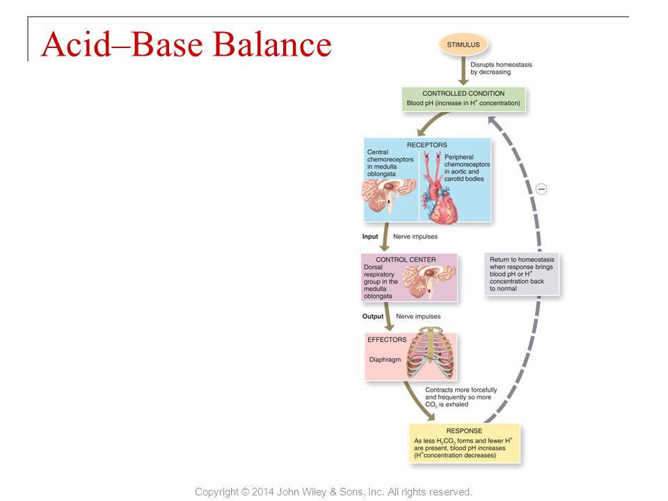 Acid–Base Balance Copyright © 2014 John Wiley & Sons, Inc. All rights reserved.
