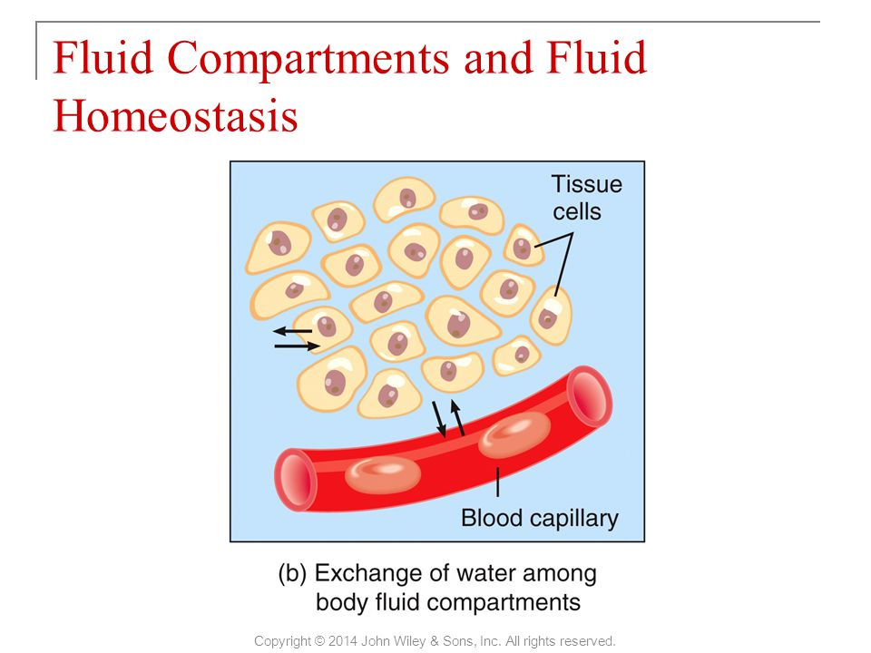  Filtration, reabsorption, diffusion and osmosis allow continuous exchange of water and solutes among body fluid compartments.