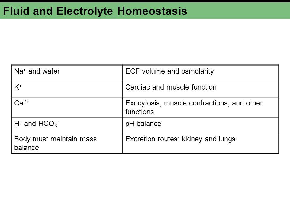 Factors Affecting Vasopressin Release Figure 20-7