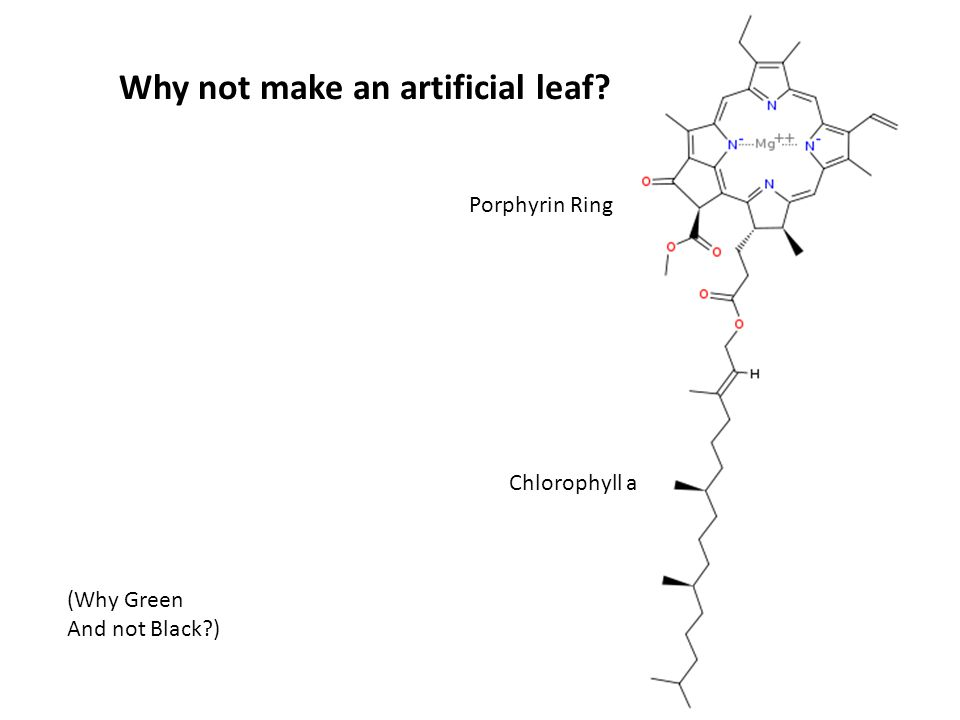Why not make an artificial leaf? Chlorophyll a Porphyrin Ring (Why Green And not Black?)