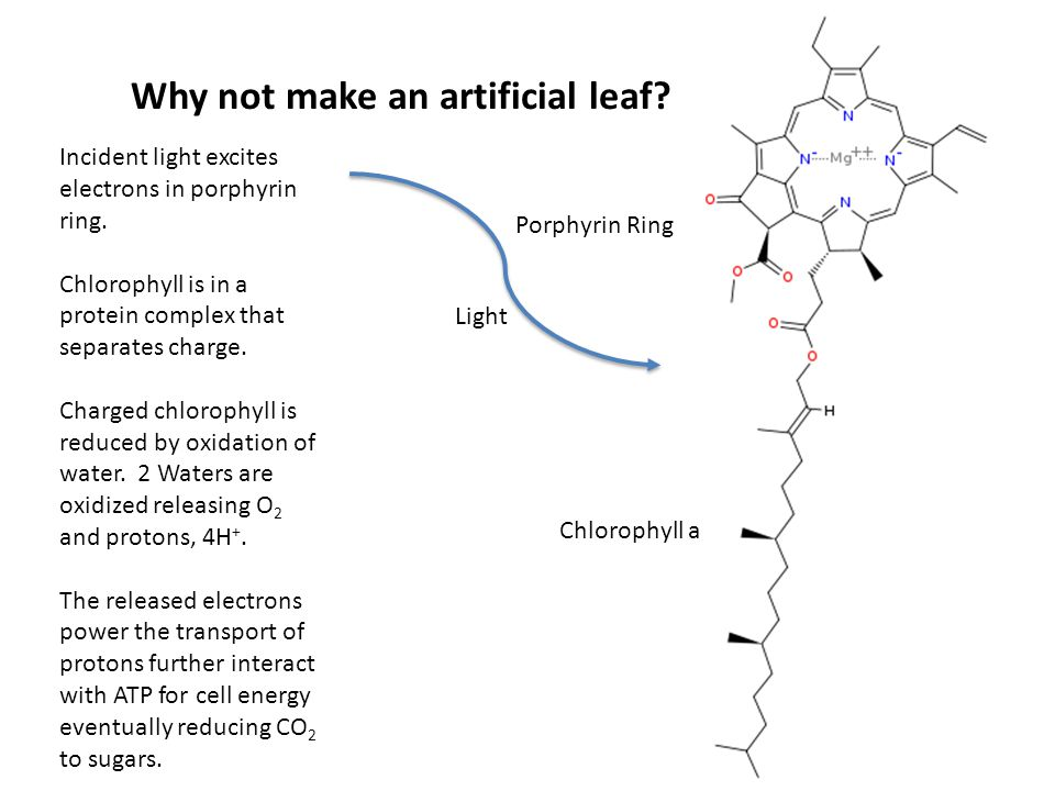 Why not make an artificial leaf? Chlorophyll a Porphyrin Ring Light Incident light excites electrons in porphyrin ring. Chlorophyll is in a protein co