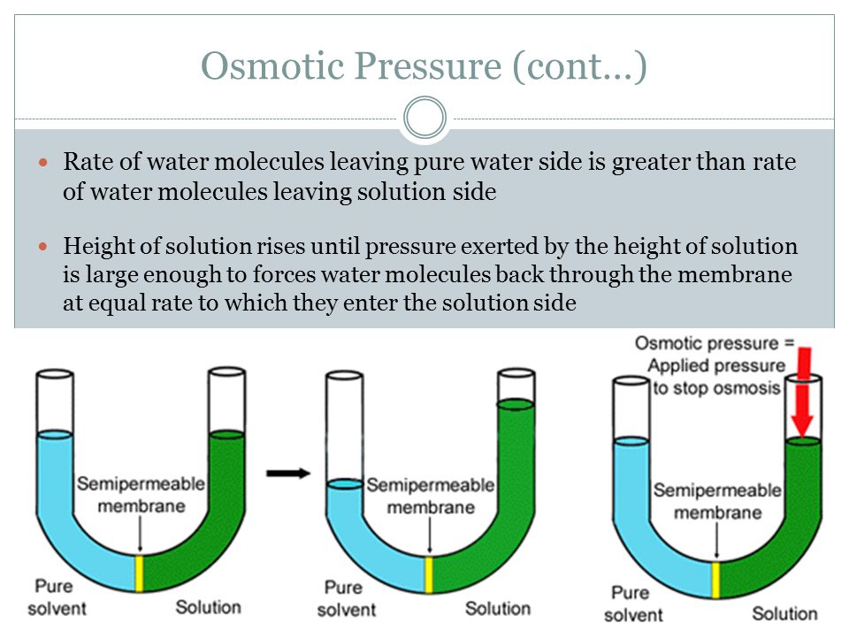 Osmotic Pressure (cont…) Rate of water molecules leaving pure water side is greater than rate of water molecules leaving solution side Height of solut