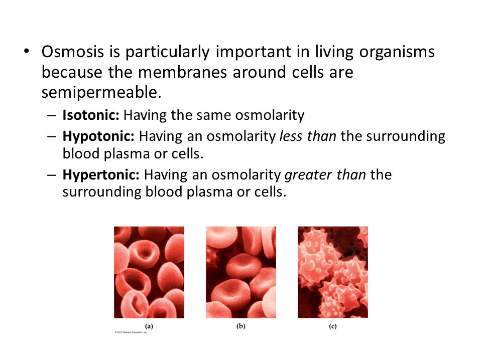 Osmosis is particularly important in living organisms because the membranes around cells are semipermeable.