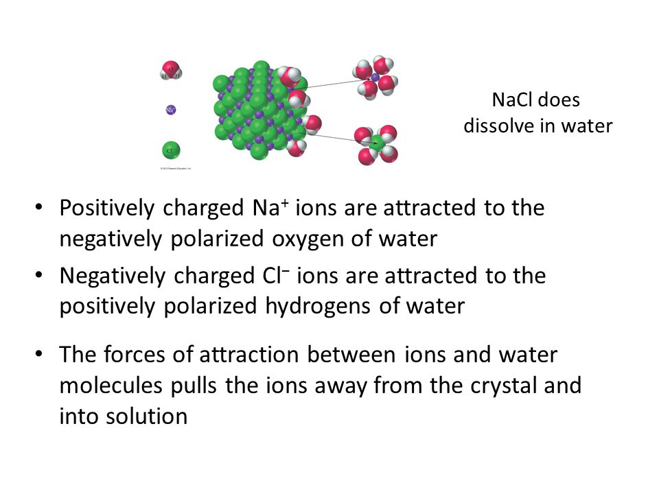 Positively charged Na + ions are attracted to the negatively polarized oxygen of water Negatively charged Cl − ions are attracted to the positively polarized hydrogens of water The forces of attraction between ions and water molecules pulls the ions away from the crystal and into solution NaCl does dissolve in water