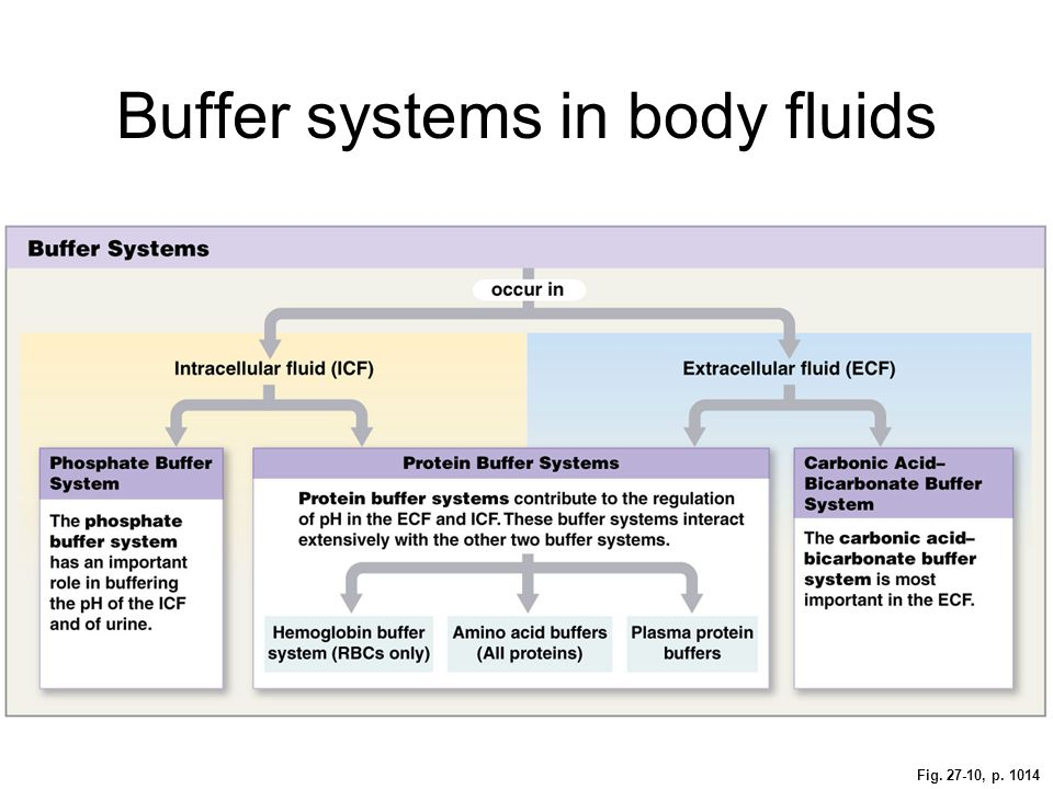 Fig. 27-10, p. 1014 Buffer systems in body fluids