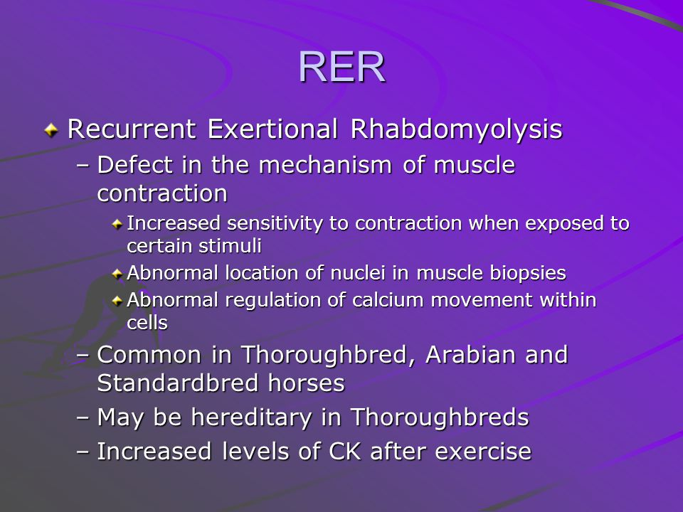 RER Recurrent Exertional Rhabdomyolysis –Defect in the mechanism of muscle contraction Increased sensitivity to contraction when exposed to certain stimuli Abnormal location of nuclei in muscle biopsies Abnormal regulation of calcium movement within cells –Common in Thoroughbred, Arabian and Standardbred horses –May be hereditary in Thoroughbreds –Increased levels of CK after exercise