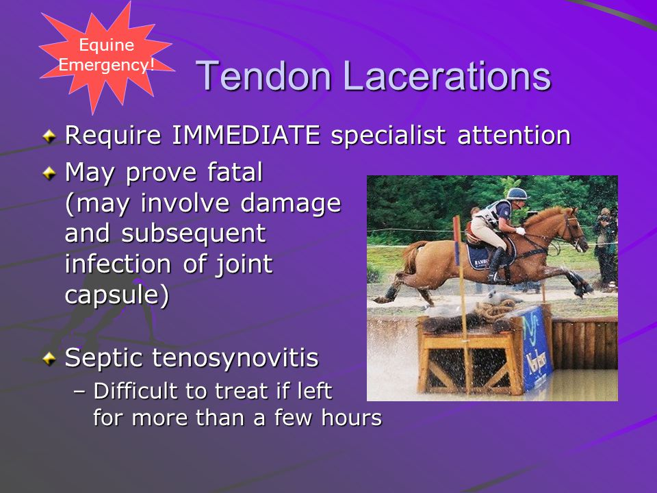 Tendon Lacerations Tendon Lacerations Require IMMEDIATE specialist attention May prove fatal (may involve damage and subsequent infection of joint capsule) Septic tenosynovitis –Difficult to treat if left for more than a few hours Equine Emergency!