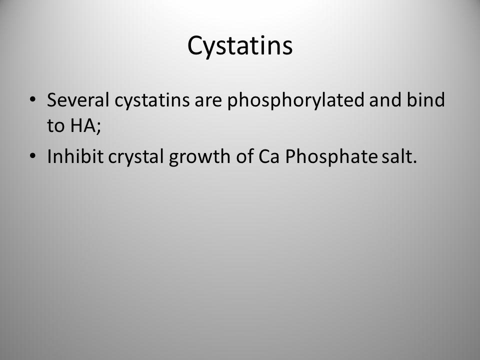 Cystatins Several cystatins are phosphorylated and bind to HA; Inhibit crystal growth of Ca Phosphate salt.
