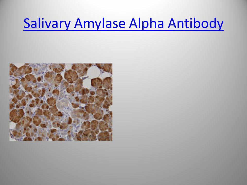Salivary Amylase Alpha Antibody