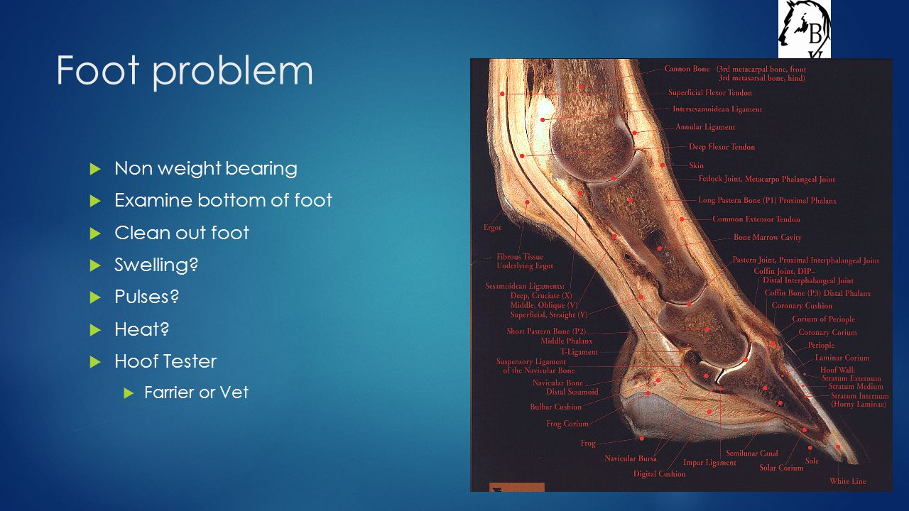 Foot problem  Non weight bearing  Examine bottom of foot  Clean out foot  Swelling.
